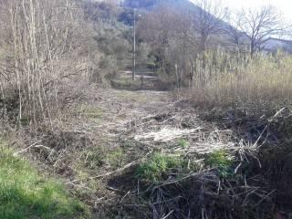 Foto - Terreno agricolo in Vendita a Monsummano Terme