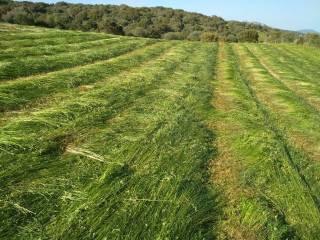 Foto - Terreno agricolo in Vendita a Telti