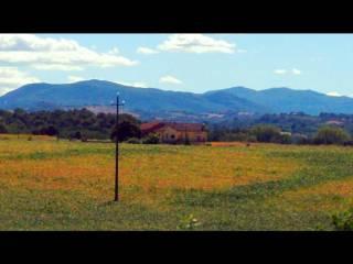 Foto - Terreno agricolo in Vendita a Castell'Arquato