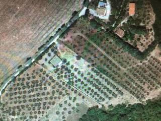 Foto - Terreno agricolo in Vendita a Torri in Sabina
