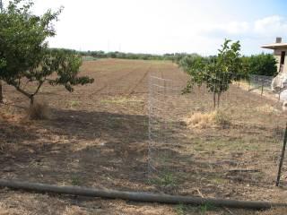 Foto - Terreno agricolo in Vendita a Milazzo
