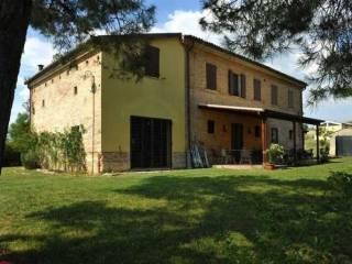 Foto - Rustico / Casale, ottimo stato, 280 mq, Staffolo