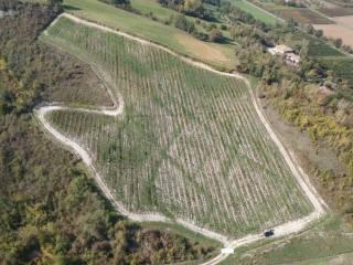 Foto - Terreno agricolo in Vendita a Savignano sul Panaro