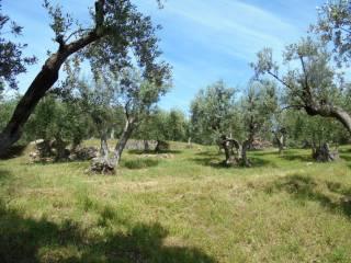Foto - Terreno agricolo in Vendita a Suvereto