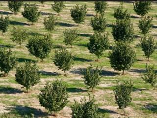 Foto - Terreno agricolo in Vendita a Belvedere Langhe