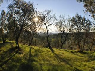 Foto - Terreno agricolo in Vendita a Firenze