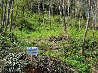Foto - Terreno edificabile residenziale a Besozzo