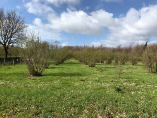 Foto - Terreno agricolo in Vendita a Bassano Romano