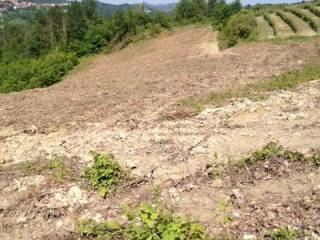 Foto - Terreno agricolo in Vendita a Santa Vittoria d'Alba