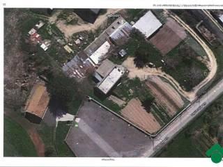 Foto - Terreno edificabile residenziale a Cellere
