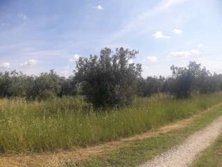 Foto - Terreno agricolo in Vendita a Fiano Romano
