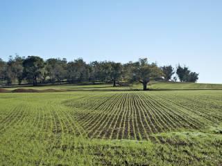 Foto - Terreno agricolo in Vendita a Arquà Petrarca
