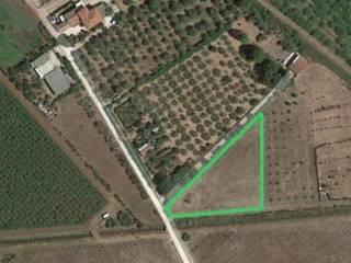 Foto - Terreno agricolo in Vendita a Cisterna di Latina
