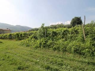 Foto - Terreno edificabile residenziale a San Giovanni Ilarione