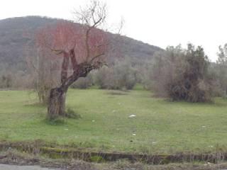 Foto - Terreno agricolo in Vendita a Scandriglia
