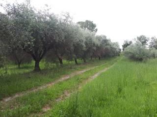 Foto - Terreno agricolo in Vendita a Corinaldo