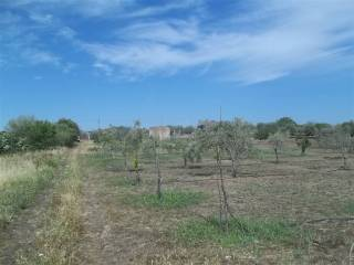 Foto - Terreno agricolo in Vendita a Belpasso