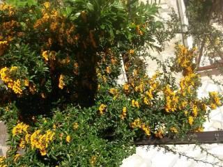 Foto - Villetta a schiera residence solaris, Rocca di Cambio