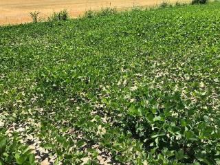 Foto - Terreno agricolo in Vendita a Adria