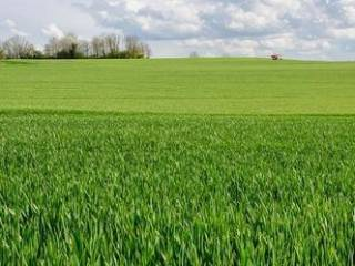 Foto - Terreno agricolo in Vendita a Manciano