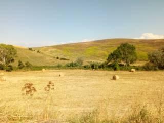 Foto - Terreno agricolo in Vendita a Tuscania