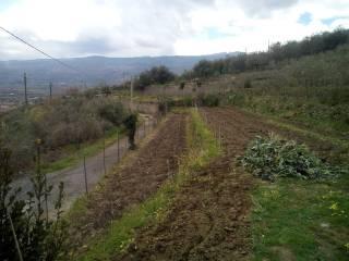 Foto - Terreno agricolo in Vendita a Linguaglossa