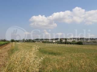 Foto - Terreno agricolo in Vendita a Tuglie