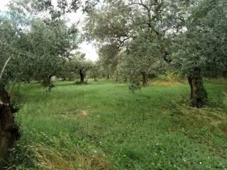 Foto - Terreno agricolo in Vendita a Sant'Agata de' Goti