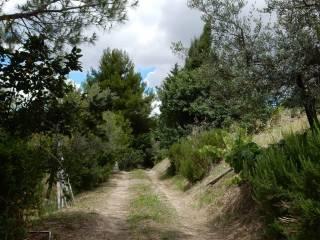 Foto - Terreno agricolo in Vendita a Larino