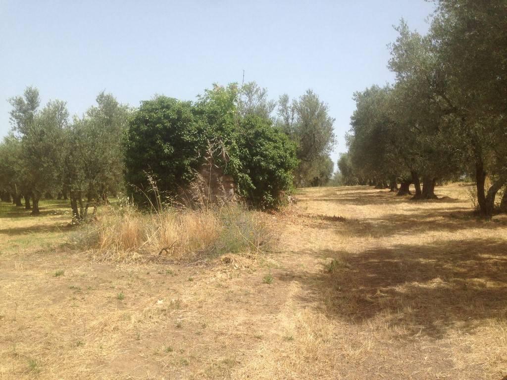 foto TERRENO Terreno agricolo in Vendita a Vetralla