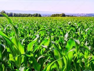 Foto - Terreno agricolo in Vendita a Sommacampagna