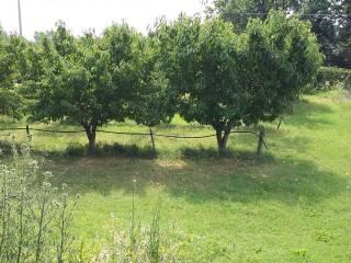 Foto - Terreno agricolo in Vendita a Vignola