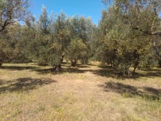 Foto - Terreno agricolo in Vendita a Vetralla
