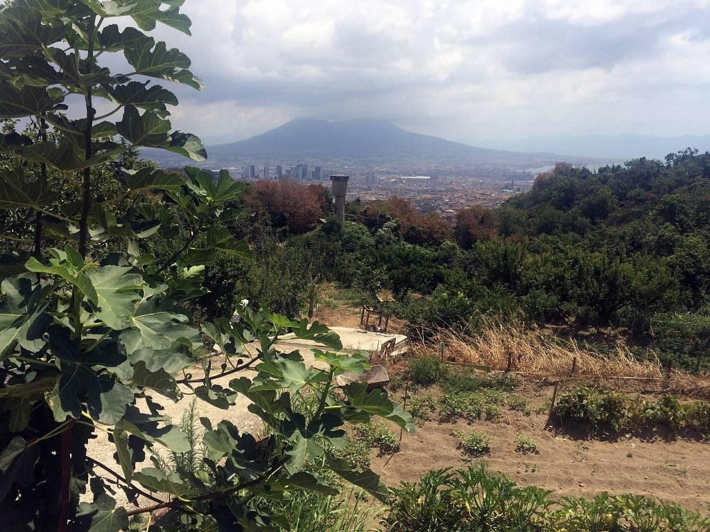 foto  Terreno agricolo in Vendita a Napoli