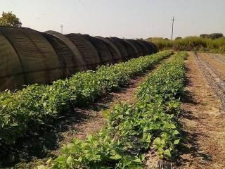 Foto - Terreno agricolo in Vendita a San Felice sul Panaro
