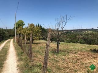 Foto - Terreno agricolo in Vendita a Sant'Angelo Romano