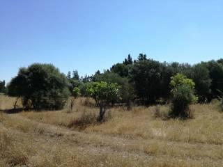 Foto - Terreno agricolo in Vendita a Assemini