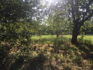 Foto - Terreno agricolo in Vendita a Marzano Appio