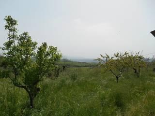 Foto - Terreno agricolo in Vendita a Montecchio