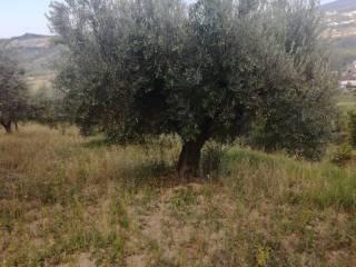 Foto - Terreno agricolo in Vendita a Scafa