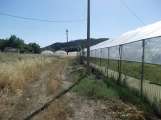 Foto - Terreno agricolo in Vendita a Castelnuovo di Val di Cecina