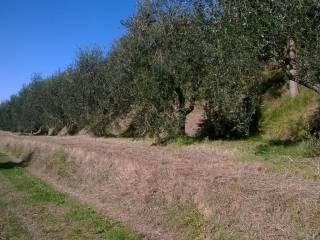 Foto - Terreno agricolo in Vendita a Capannoli