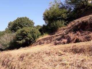Foto - Terreno agricolo in Vendita a Cicagna