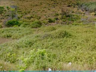 Foto - Terreno agricolo in Vendita a Gaeta
