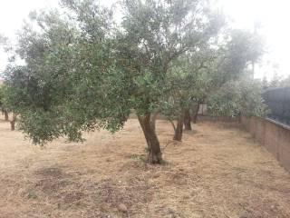 Foto - Terreno agricolo in Vendita a Quartu Sant'Elena