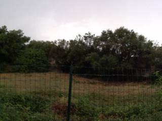 Foto - Terreno agricolo in Vendita a Mola di Bari