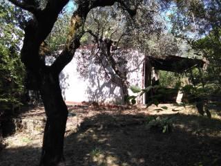 Foto - Casa indipendente via Mirtense, Poggio Nativo