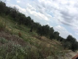Foto - Terreno agricolo in Vendita a Taviano