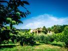 Casa indipendente Vendita Arquà Petrarca