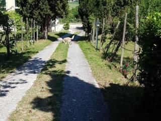 Foto - Villa Località Pane e Cacio, San Gemini
